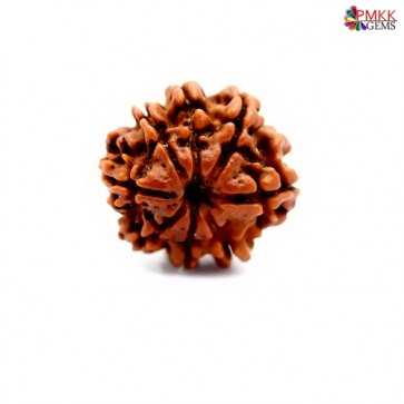 Eight mukhi rudraksha online