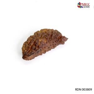 Natural 1 Mukhi Rudraksha